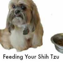 Feeding Your Shih Tzu