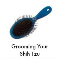 Grooming the Shih Tzu