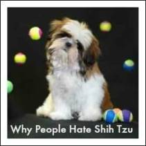 Shih Tzu Poem Link to Page