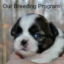 Link to Information on our breeding program.
