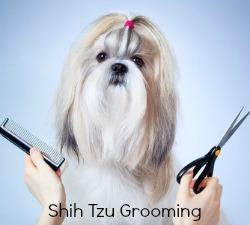 Brushing and Combing the Shih Tzu