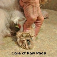Care of Paw Pads