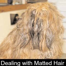 Dealing with Matted Hair
