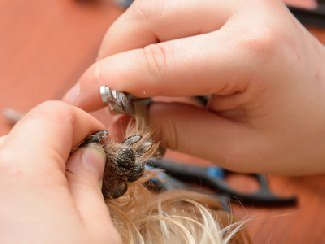 How to clip dog nails.
