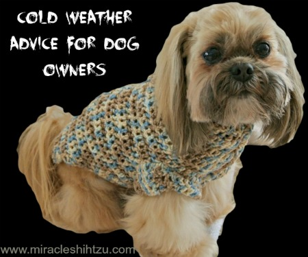 Cold Weather Advice For Shih Tzu Lovers