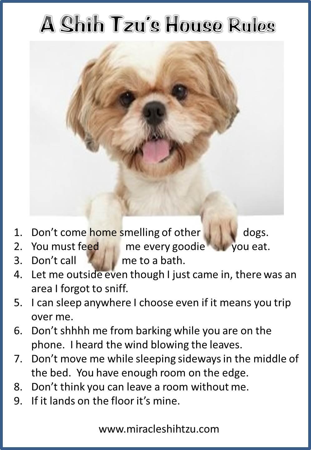 Shih Tzu House Rules