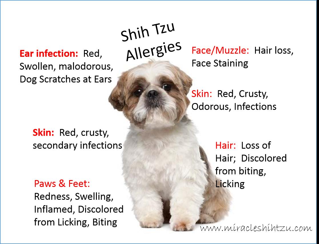 Shih Tzu Dog Quotes Quotesgram