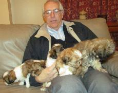 Man with a litter of Shih Tzu Puppies