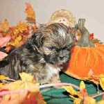 Autumn Puppy Names Link
