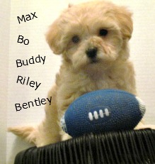Boy Puppy Names