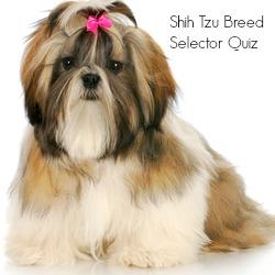 Shih Tzu Breed Selector Quiz Link