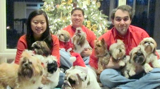 Family with a Pack of Shih Tzu Dogs.