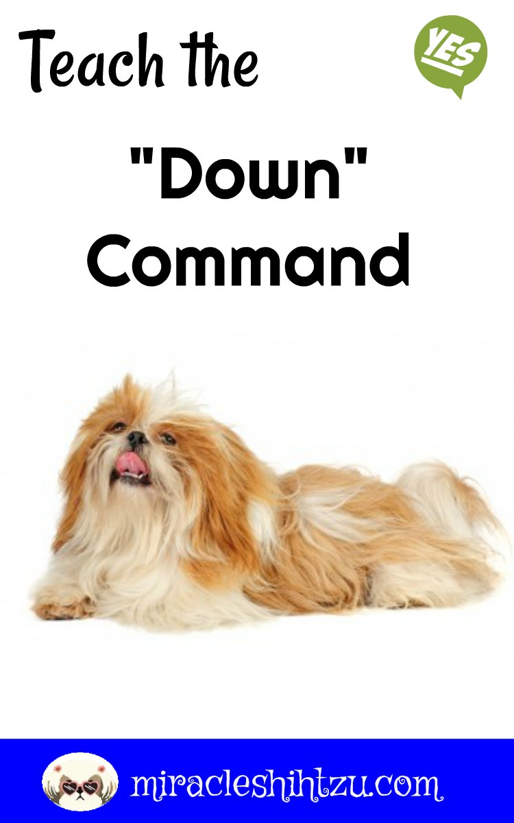 Training A Small Dog To Lie Down
