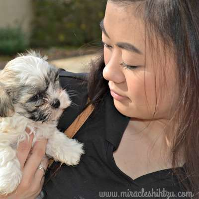 Elizabeth Jones Holding a puppy at Miracle Shih Tzu