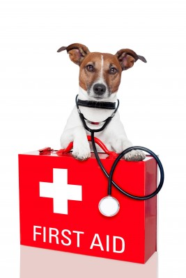 First Aid Supplies of Dogs