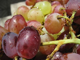 Dogs should never eat grapes or raisins.