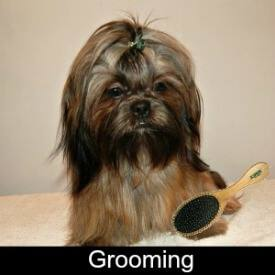 Grooming Your Shih Tzu Link