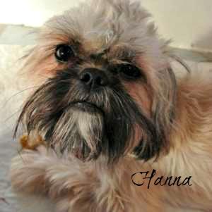 Hanna's puppy video link