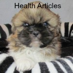 Shih Tzu Health Articles