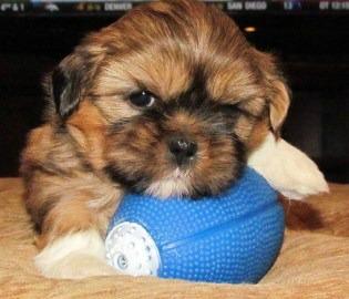 New Puppy Owner FAQ