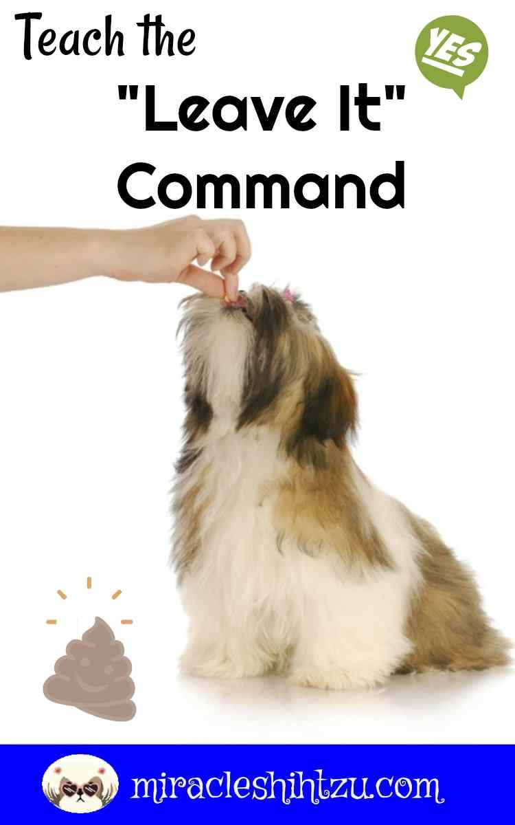 Teach your Shih Tzu the