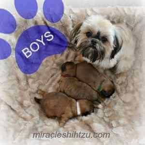 Lilah with her 3 boys