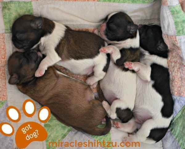 Lucy and Ketchikan's Litter of Four