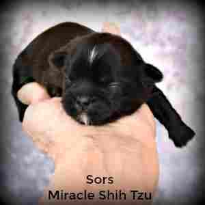 This puppy is a week old, eyes and ears closed.
