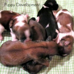 Puppy Development