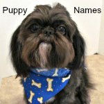 Boy Dog Names