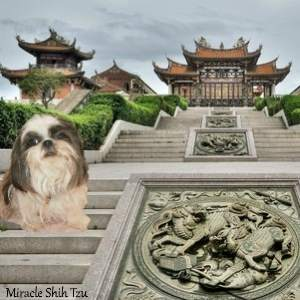 A Shih Tzu dog is sitting on the steps of an ancient Temple