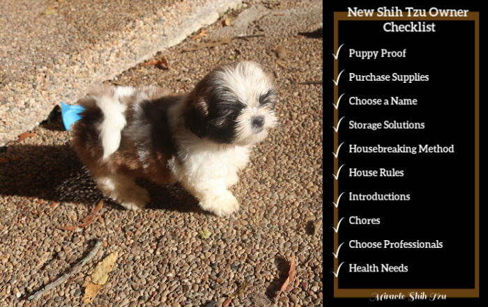 New Shih Tzu Owner Checklist: From Planning to Welcoming to