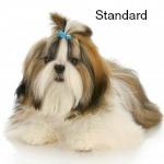 Shih Tzu Standard