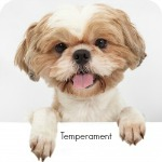 Shih Tzu Temperament