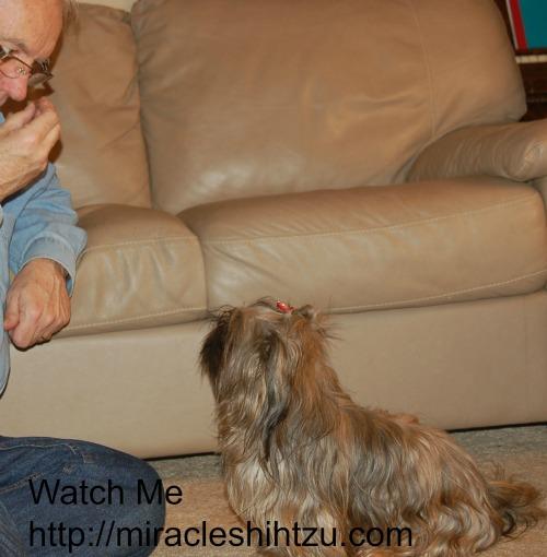 Teach Your dog the
