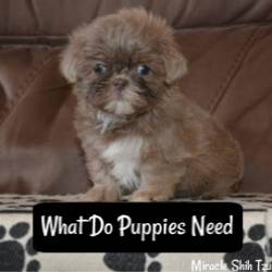 What do puppies need?