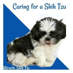 Caring for a Shih Tzu Link