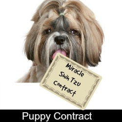 Link to Miracle Shih Tzu Puppy Buyers Contract