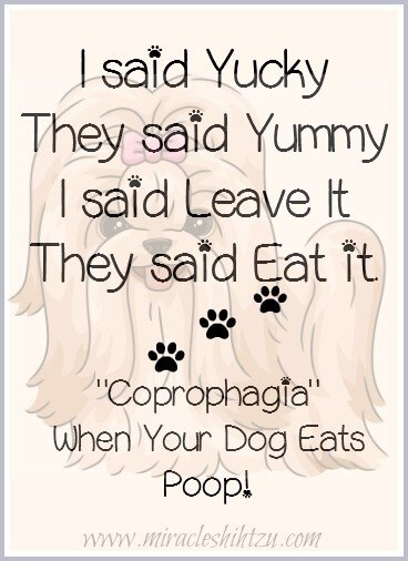 Coprophagia, when a dog eats feces