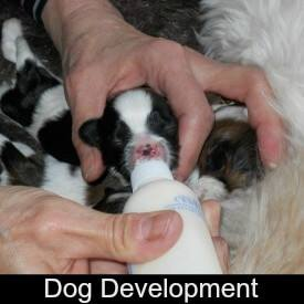 Puppy and Dog Development
