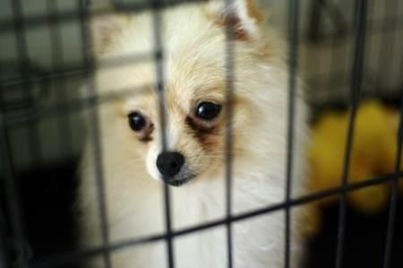 Pet Store Puppies