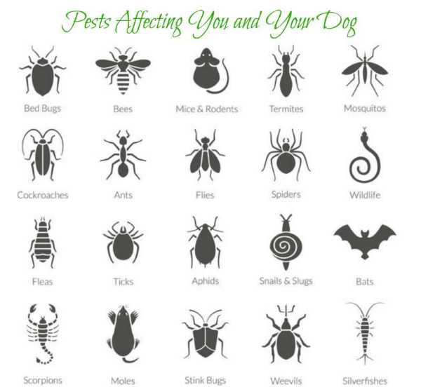 Safe outdoor space for your Shih Tzu - clip art of common pests
