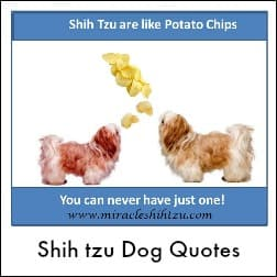 Dog Quotes Link