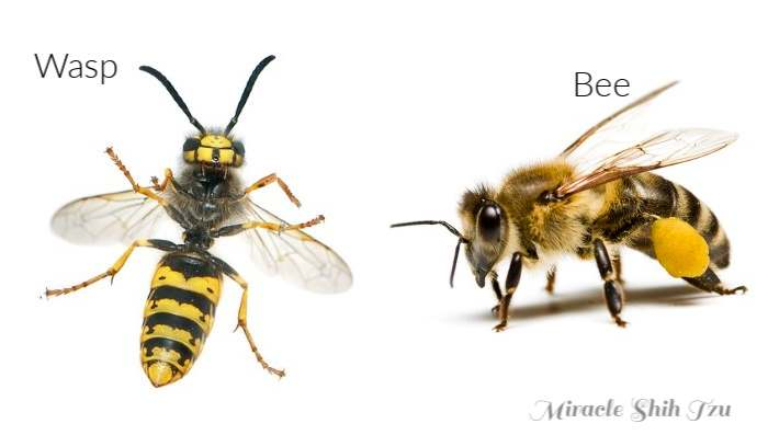 A Wasp and Bee shown side by side on a white background.