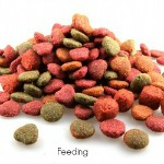 History about the types of Dog Foods