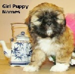 Girl Puppy Names Link