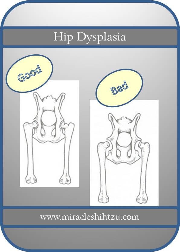 Hip Dysplasia