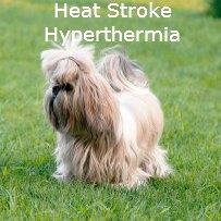 Heat Stroke in Shih Tzu Dogs: A medical Emergency