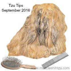 Tzu Tips, Shih Tzu Magazine, September 2016