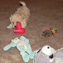 Puppies need a stimulating environment.